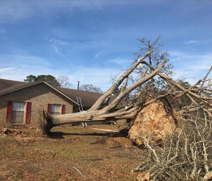 A large tree that has been uprooted and laying on its side.